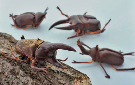 Chocolate Beetles